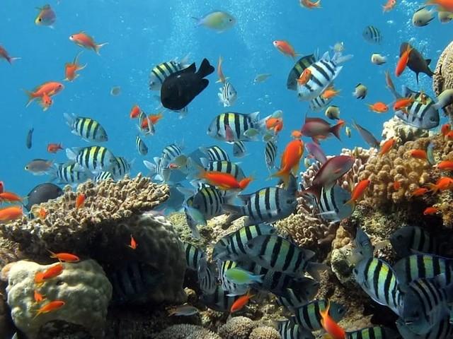 Puglia come le Maldive: scoperta la prima (meravigliosa) barriera corallina in Italia