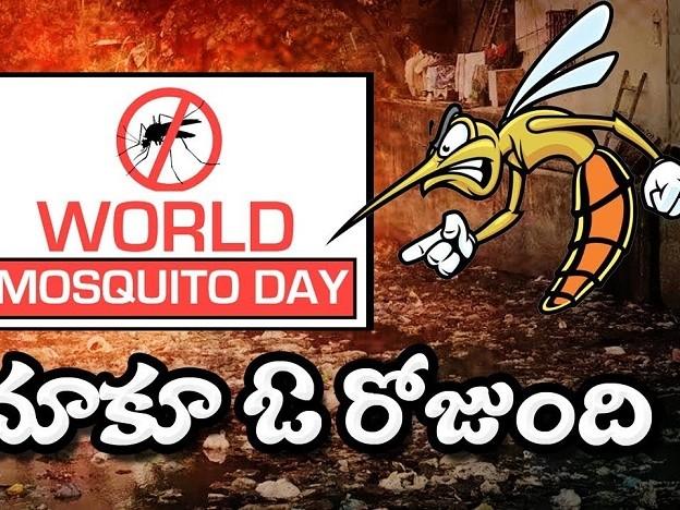 World Mosquito Day, ricerca e prevenzione contro le zanzare