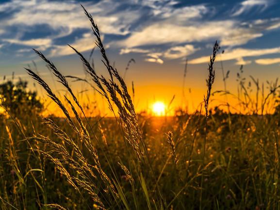 Biotecnologie in agricoltura, si apre il dossier a Bruxelles