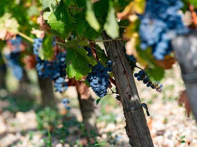 Alla guerra del vino