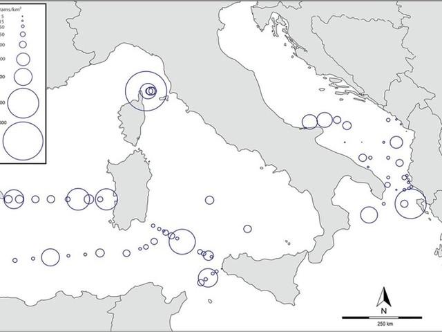 Plastica e microplastica in mare, nuova interrogazione di Rossella Muroni sul progetto Sauro