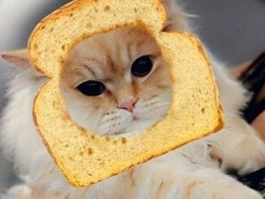 Snapchat riconosce anche i gatti, ecco i nuovi filtri dedicati agli amici pelosi