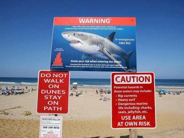 A Cape Cod è tornato lo squalo Una vittoria per gli ambientalisti