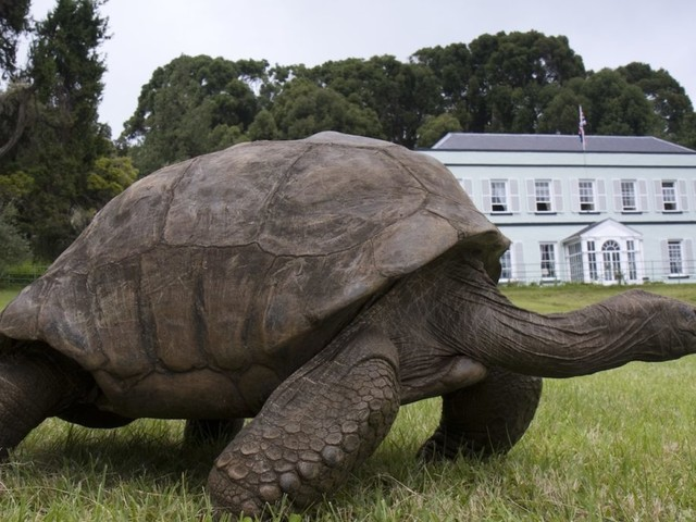 La tartaruga più anziana del mondo è gay