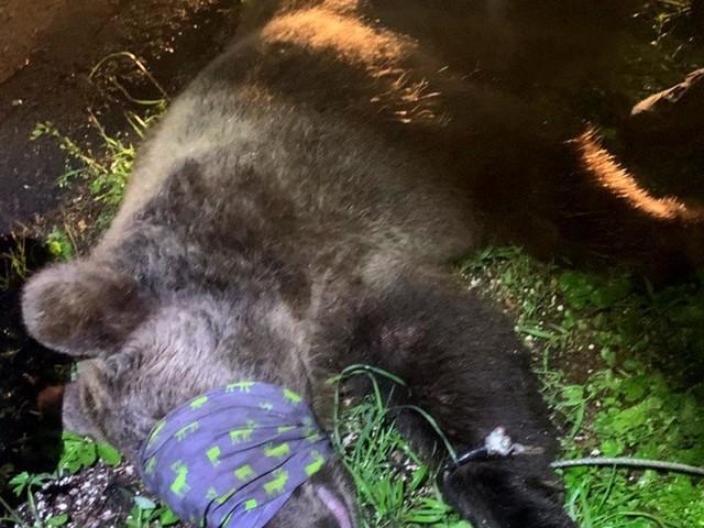 Oipa ed Enpa al Tar: impugnate le ordinanze di cattura degli orsi