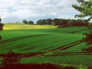 Verdi europei: con le strategie Farm to Fork e Biodiversità forte ambizione ma una lunga strada da percorrere