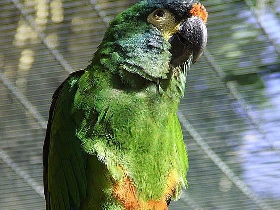 Animali dell'Amazzonia: la fauna