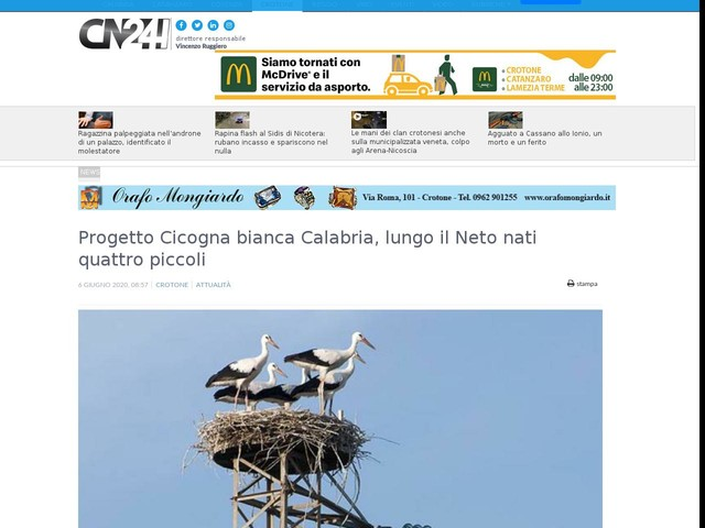Progetto Cicogna bianca Calabria, lungo il Neto nati quattro piccoli