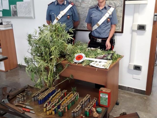 Monreale, serra di marijuana trovata in un appartamento. Arrestato un 46 enne