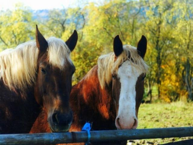 Maxi sequestro per lo storico boss Iaconis, anche un ranch con i cavalli
