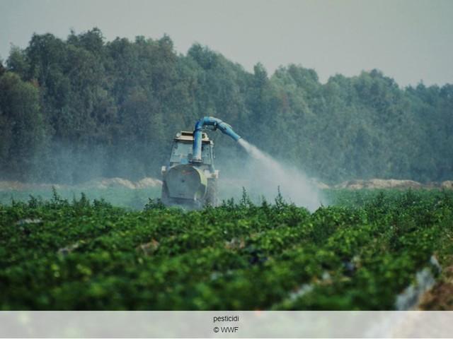 L'operazione stop pesticidi illegali in Toscana rivela un'illegalità pervasiva