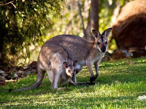 Australia a portata di clic: i consigli per visitare la terra dei canguri