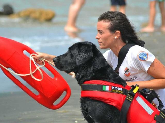 """La pattuglia dei cani eroi del mare """"Addestrateli, serve il loro aiuto"""""""