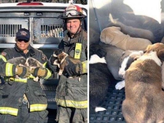 Vigili del Fuoco salvano la vita a 8 cuccioli in grave pericolo