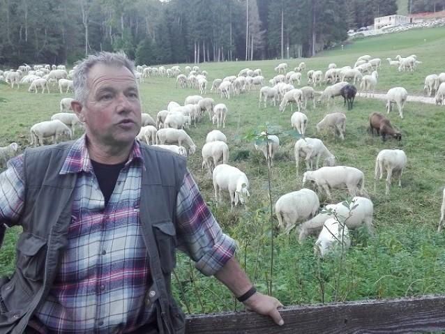 Lupi, provocazione alla festa con le pecore listate a lutto
