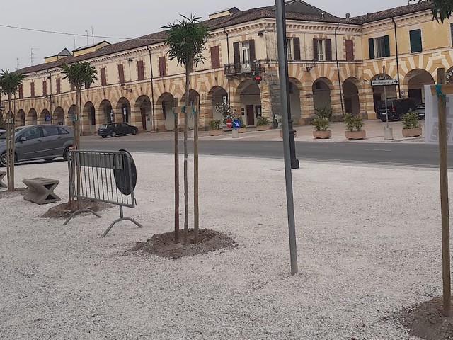 San Martino, piantumazione in piazza Castello, è polemica
