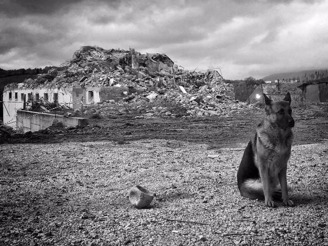 Amatrice, è morta Laga, il cane eroe che scavò nelle macerie
