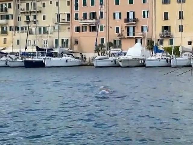 """Due balenottere avvistate all'Isola d'Elba: la """"danza"""" acquatica di fronte alla darsena di Portoferraio – Video"""