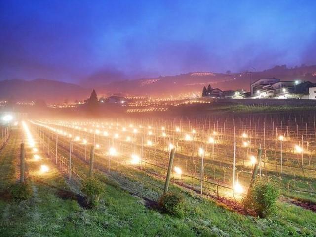 Maggio troppo rigido: in Trentino- Alto Adige candele e falò nei campi per proteggere le coltivazioni dal freddo