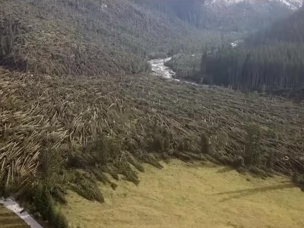 Maltempo: danni per oltre 2 miliardi al settore agricolo e forestale