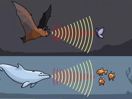 Scoperte inattese somiglianze genetiche tra pipistrelli e delfini