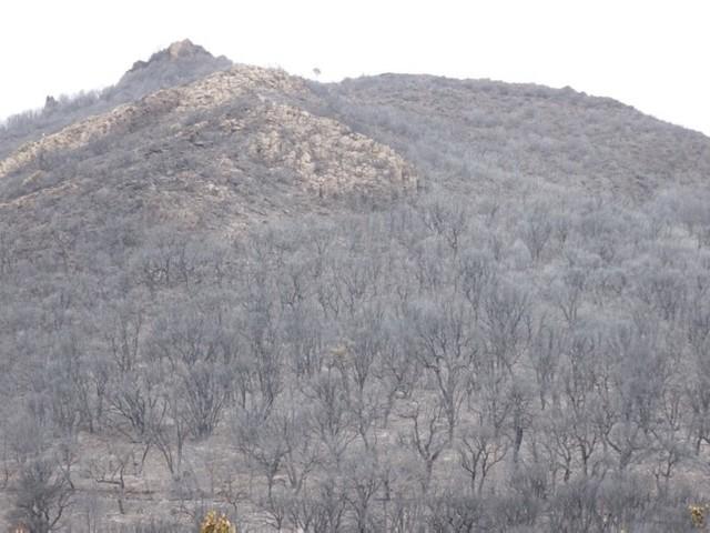 La Sardegna ferita dal fuoco fa la conta dei danni