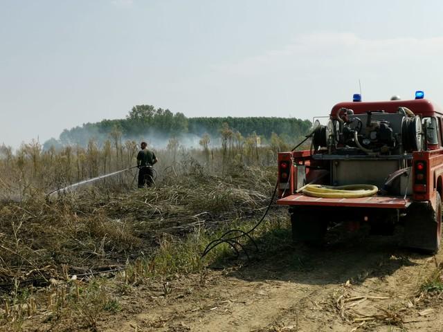 Scandolara, piromane ancora in azione: stessa area già colpita, intervengono i vigili del fuoco