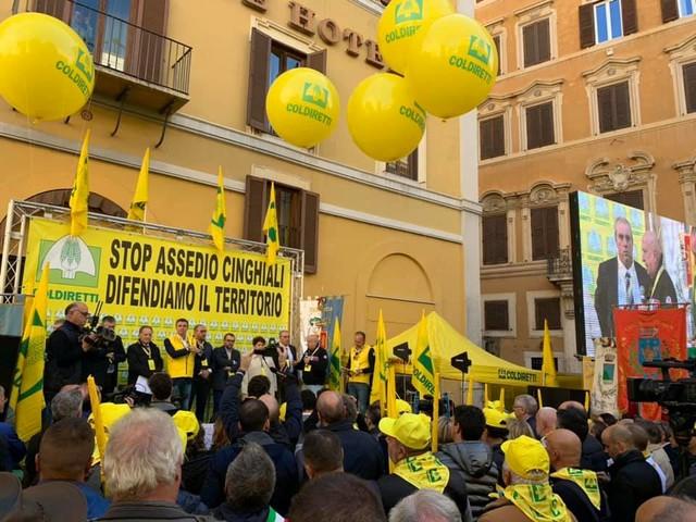 In Italia 2 milioni di cinghiali. Coldiretti: «Per l'81% degli italiani i cinghiali vanno fermati»