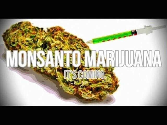 La MONSANTO crea la prima Marijuana (Canapa) OGM (Geneticamente Modificata)