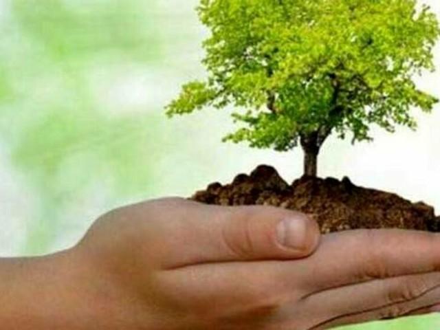 """""""Piantiamo un albero"""", il progetto per l'ambiente chiama in causa i cittadini"""