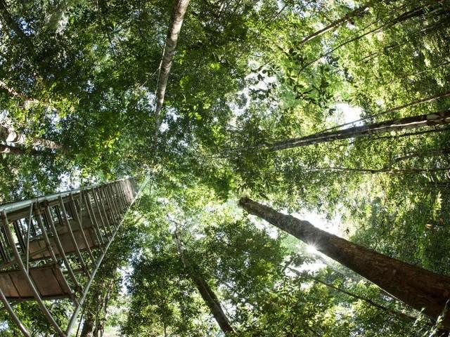 Gli alberi sono tornati a crescere, ma metà delle specie arboree europee è a rischio estinzione
