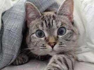 Come succede che un gatto diventa un influencer?