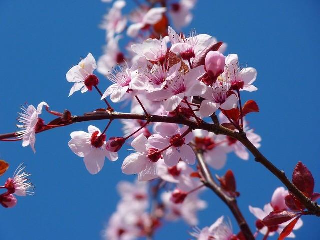 L'anticiclone è pronto: bel tempo fino a Pasqua, temperature sempre più miti