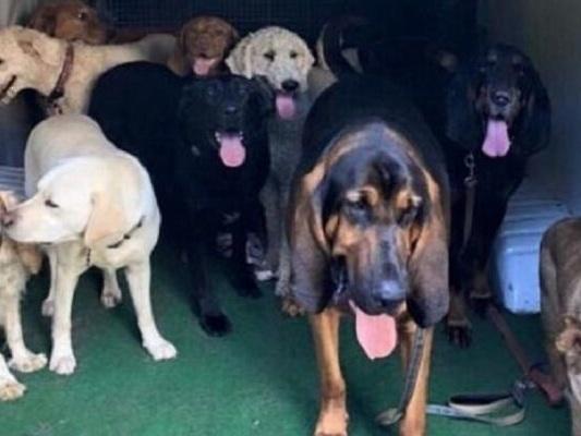 Lo scuolabus per cani che li porta nel loro asilo privato