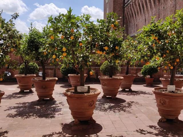 Ferrara: la città rinascimentale degli Estensi, meta ideale del turismo primaverile