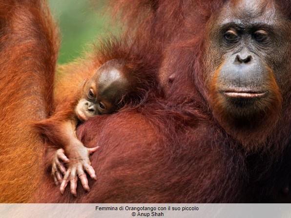 Living Planet Report, Wwf: «In 44 anni la popolazioni di vertebrati si è ridotta del 60%» (VIDEO)