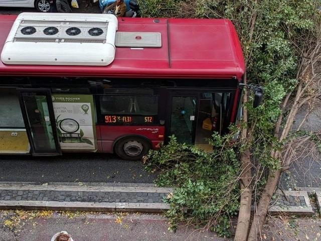 Maltempo Roma, albero cade davanti a un bus in Prati. Mimosa crolla davanti a scuola a Casal Palocco