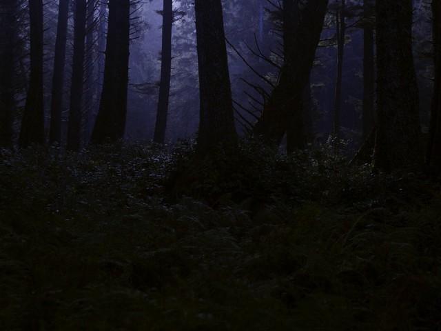 Il canto degli alberi murati