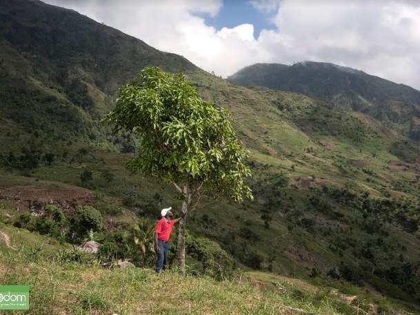 Piantare un albero nel sud nel mondo e regalarlo per Natale