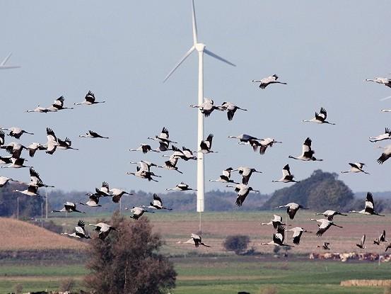 Piccoli aggiustamenti alle pale eoliche possono ridurre molto i loro impatti sull'avifauna
