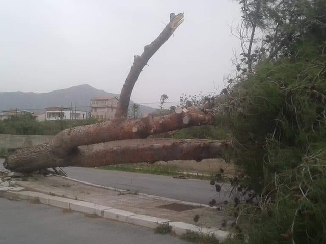 Maltempo a Pasquetta: alberi sradicati e collegamenti con le isole interrotti
