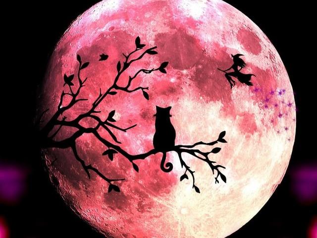 L'oroscopo settimanale dal 26 ottobre all'1 novembre, prima sestina: Ariete voto 10