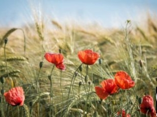 Il Senato ha approvato la legge italiana sull'agricoltura biologica