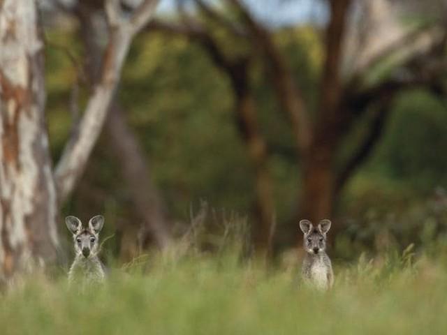 Earth day, dall'Australia alle Dolomiti: mete di viaggio dove la natura è sovrana