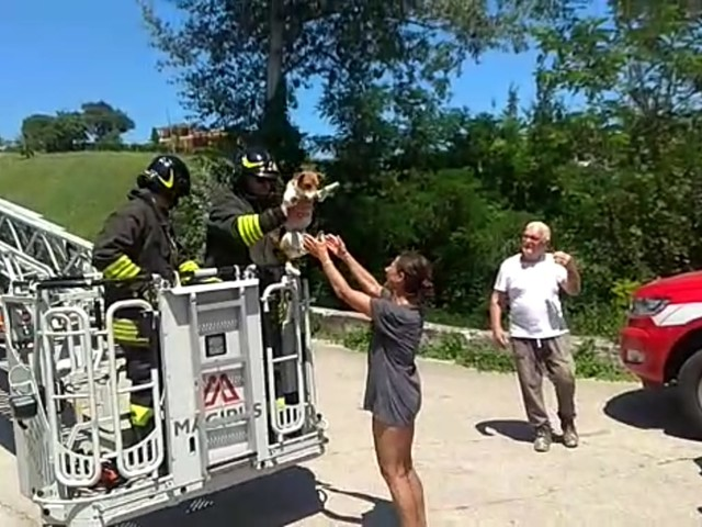Sant'Onofrio, cagnolino si arrampica sull'albero: per farlo scendere arrivano i vigili del fuoco VIDEO