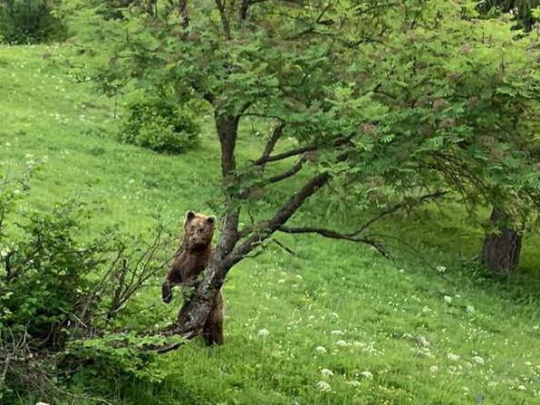 Diffida del Wwf e petizione con 60mila firme per fermare l'abbattimento dell'orso del Peller