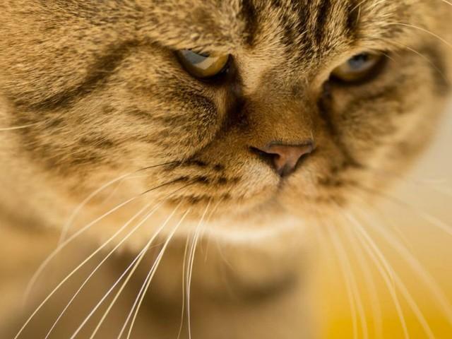 Giornata nazionale del gatto: in Italia sono quasi 8 milioni. E in famiglia sono loro le 'star'
