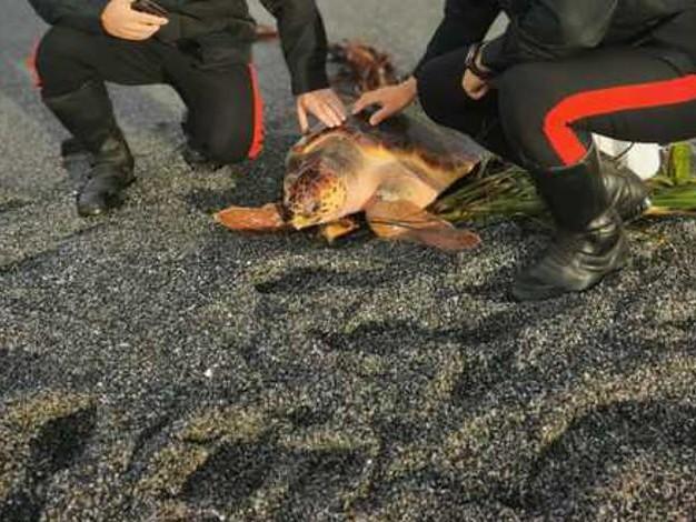 Tartaruga Caretta Caretta salvata dai carabinieri a Scalea