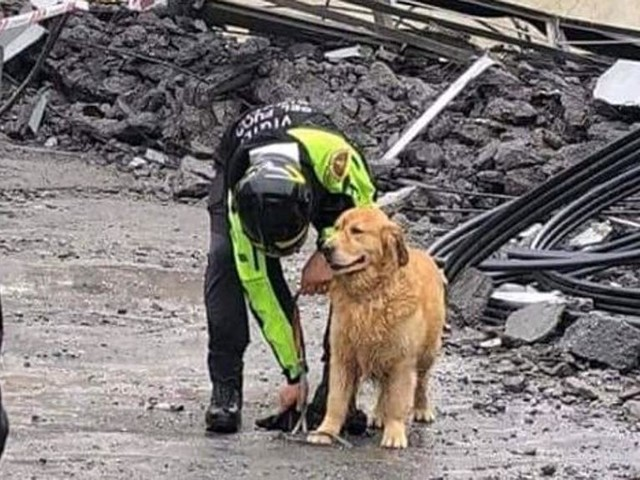 Dal Piemonte al Veneto, unità cinofile impegnate nel crollo del Ponte Morandi. C'è anche il cane Greta che salvò una bimba nel terremoto del 2016