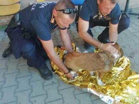 Roma, tenta il suicidio lanciandosi tra le auto in corsa con il cane svenuto al guinzaglio